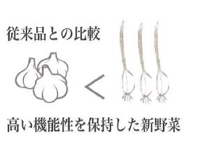 芽子にんにく 従来品との比較 新野菜